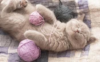 Что изменится в вашей жизни, если вы заведете кота